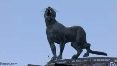شاهد: نمر يضخم يجوب ملعب كرة - صحيفة هتون الدولية
