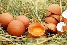 شاهد: انعاش جنين داخل بيضة مفتوحة - صحيفة هتون الدولية