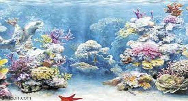شاهد اكتشاف مستعمرة مرجانية ضخمة في جزيرة سعودية -صحيفة هتون الدولية