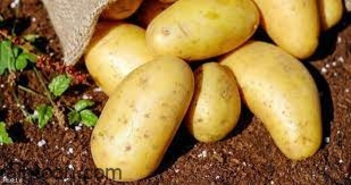البطاطس فوائد صحية مدهشة -صحيفة هتون الدولية