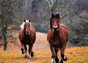شاهد: لحظة اصطدام حصان بمركبة - صحيفة هتون الدولية