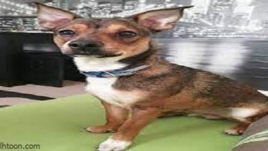 كلب يبتلع عصا طولها نصف طول جسمه ويخضع لجراحة لإزالتها -صحيفة هتون الدولية
