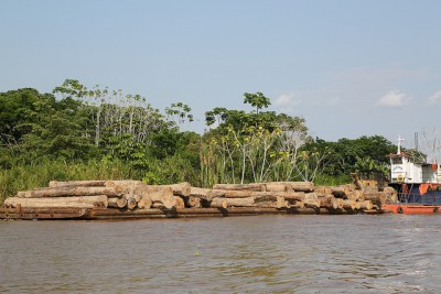 Illegal wood travelling upriver