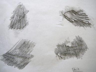 shells rubbing
