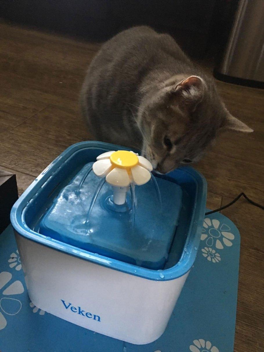 best cat bowls