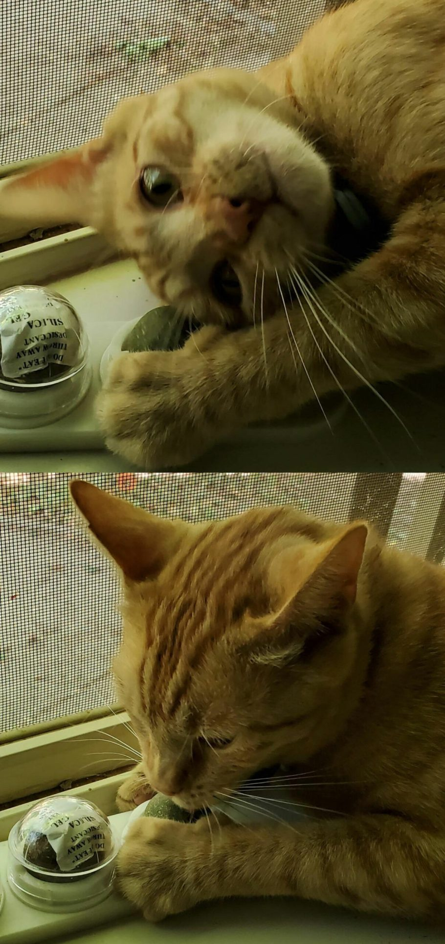 cat hunting toys