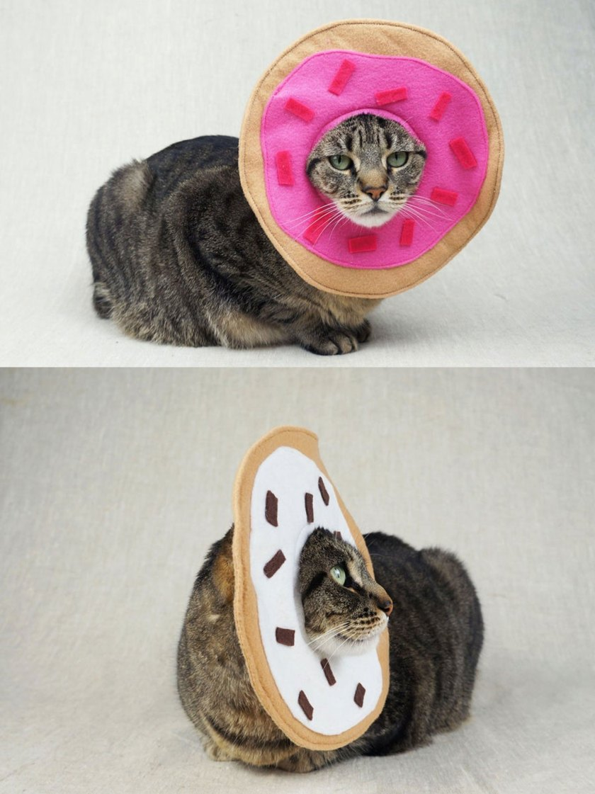 cat with donuts