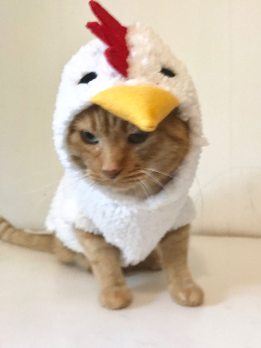 chicken cat costume
