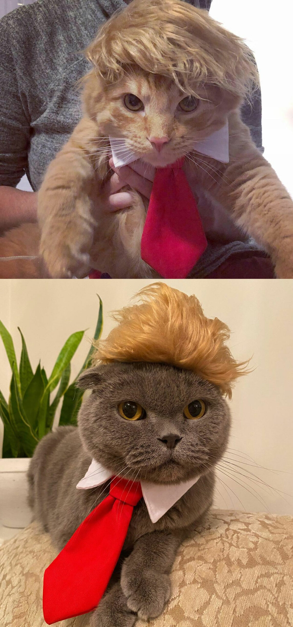 cute cat costumes