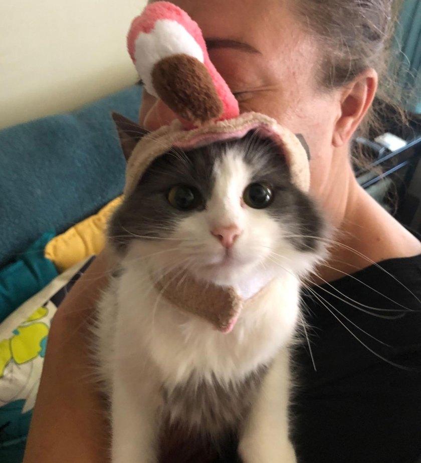 cute cat ears halloween costume