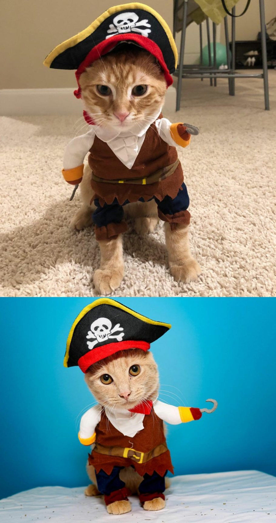 cute cat costume for adults