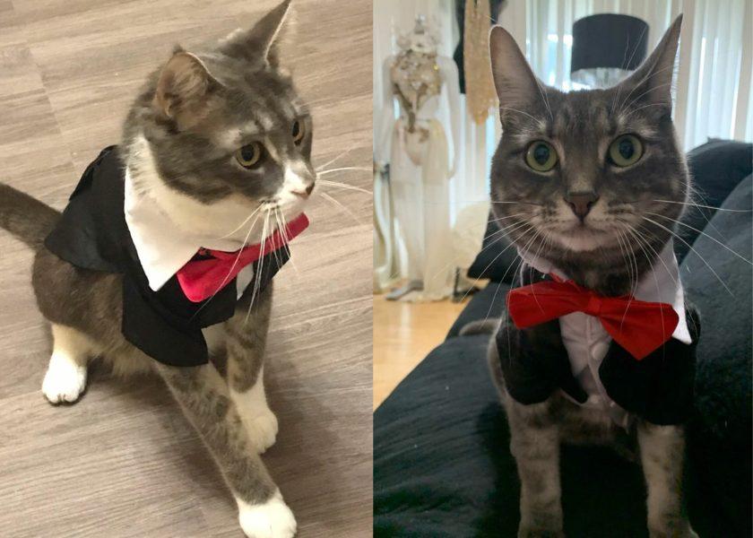 cute outfits cat shirt