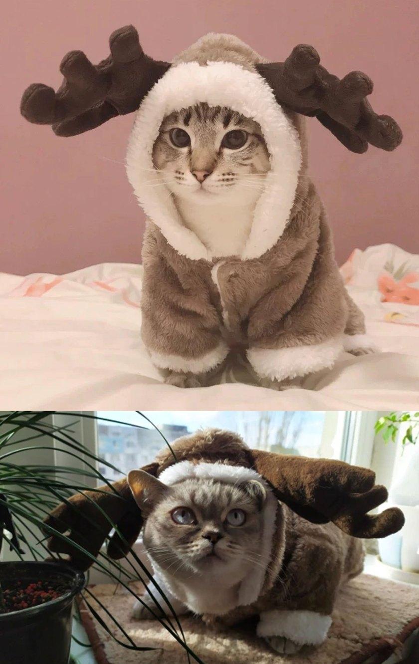 winter cat costume