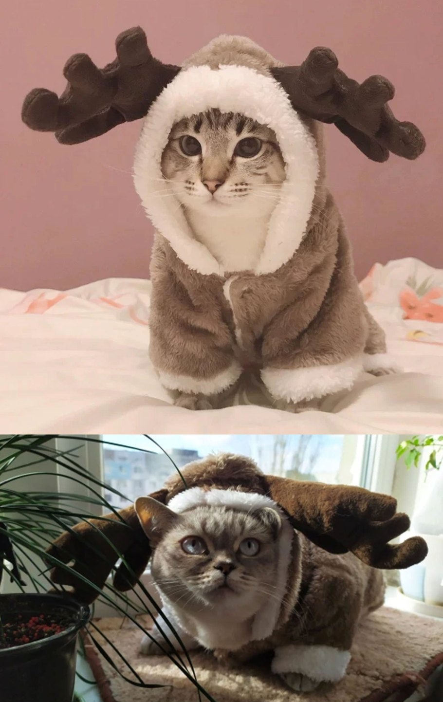 winter cat costume