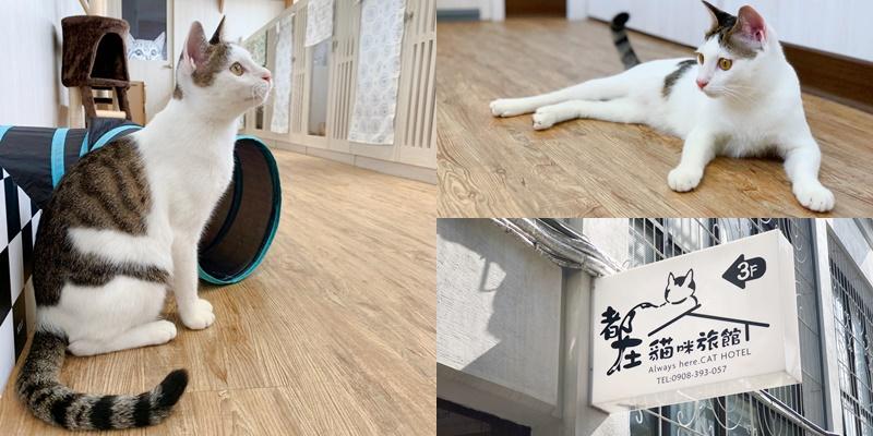 【貓咪住宿】超美貓咪旅館!!!台南唯一透明天空步道貓咪旅館《都在貓咪旅館》  貓咪安親   貓咪旅店 