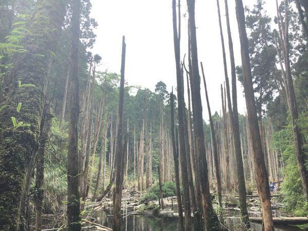 【遊記-台中南投】 忘憂森林 妖怪村   輕旅行 與姊妹的兩天一夜