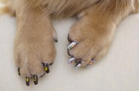 Pretty Paws: The Japanese art of dog manicure | Alice ...