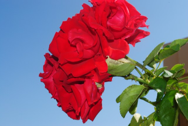 Glorious Greek Mainland Blooms-Manual Mode: Focal Length: 44mm; Exposure Time: 1/50sec; ISO-100; F stop f/20