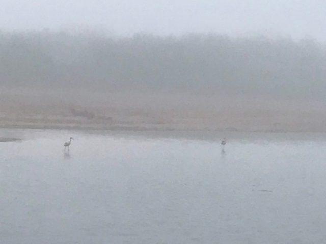 flamingos in Morocco flamingoes alice morrison