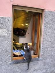 cat window Italy