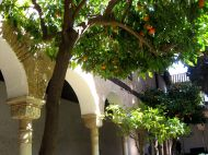 Beautiful yards with orange trees.