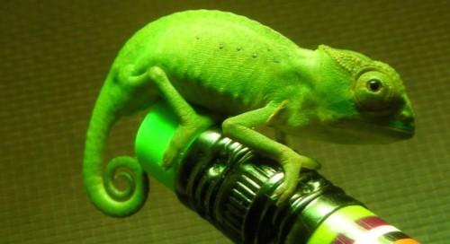 Chameleon Words