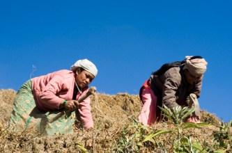 nepal-workers