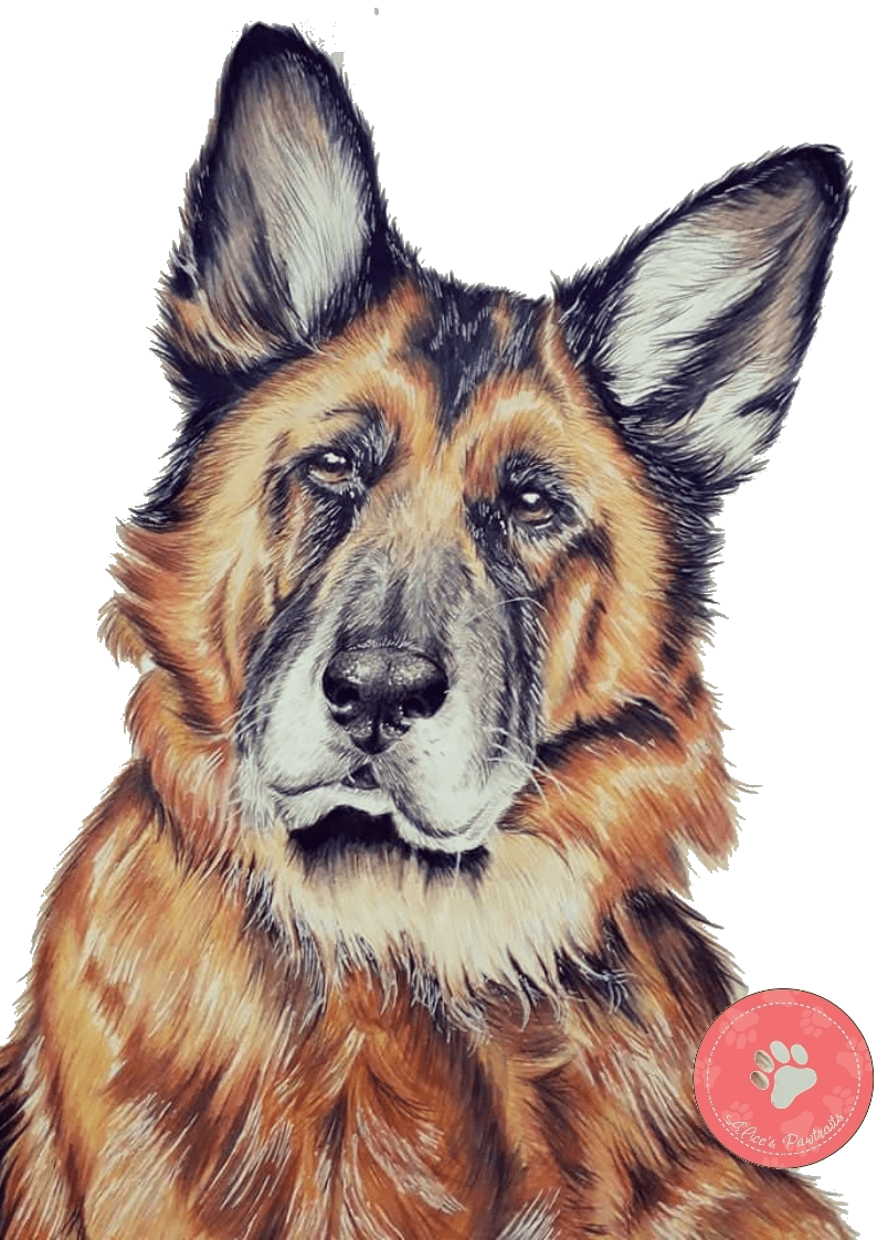 Colored pencil pet portrait, perfect gift for every occasion