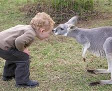 Kangaroos - Human 01