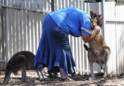 Kangaroos - Human 03