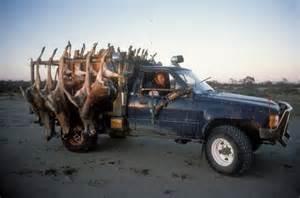 Kangaroos - Killed in trucks and storage 010