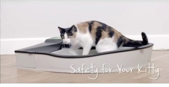 smart-kitty-725x374