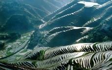 qian-gift-organic-rice-4