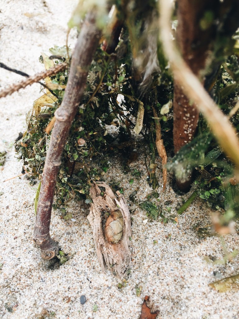 Beach Fairy House with Pinecone Baby and Driftwood Cradle