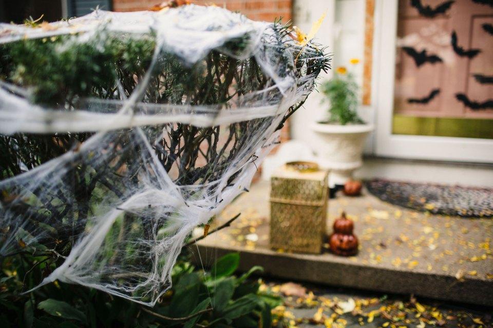 Cobweb-Covered-Bushes-Shrubs