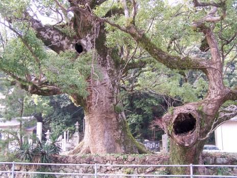 tree kami; Shikoku, Japan; 2006