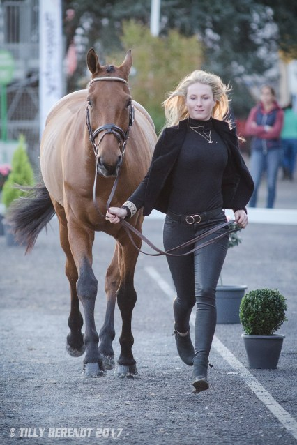Lici Hawker CHARLES RR - Trot Up