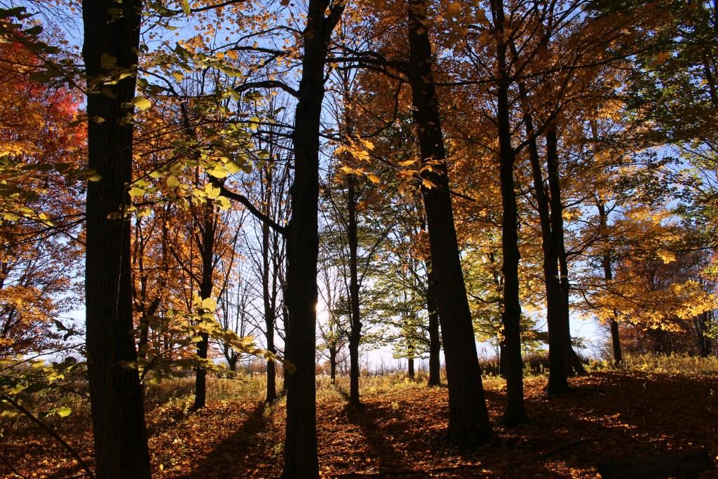 fallwoods