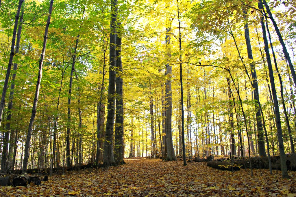 fallwoods3
