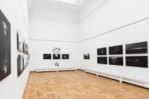wystawafotografiipsowwpalacusztukiwkrakowie-2