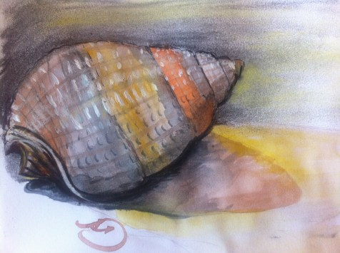 Every Day in May 2014 #13 Draw a seashell - A seashell.