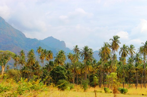 Palm trees and mountains - On the train from Mwanza to Dar Es Salaam, Tanzania.