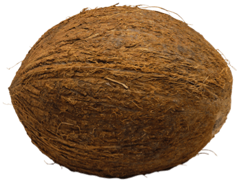 cute coconut clipart