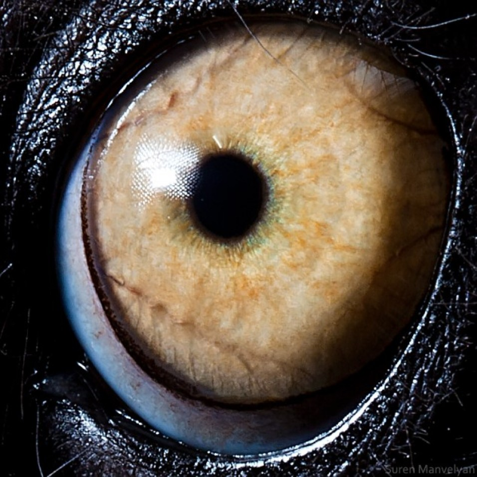 Animal-Eyes-Lemur-634x634