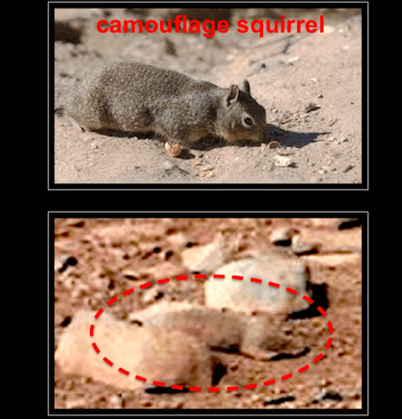 NASA totally found a squirrel on Mars and didn't tell anybody