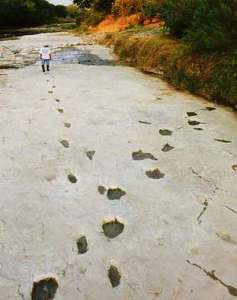 Human footprints crossing 3 toed dinosaur footprints fossilised in the Paluxy river bed.
