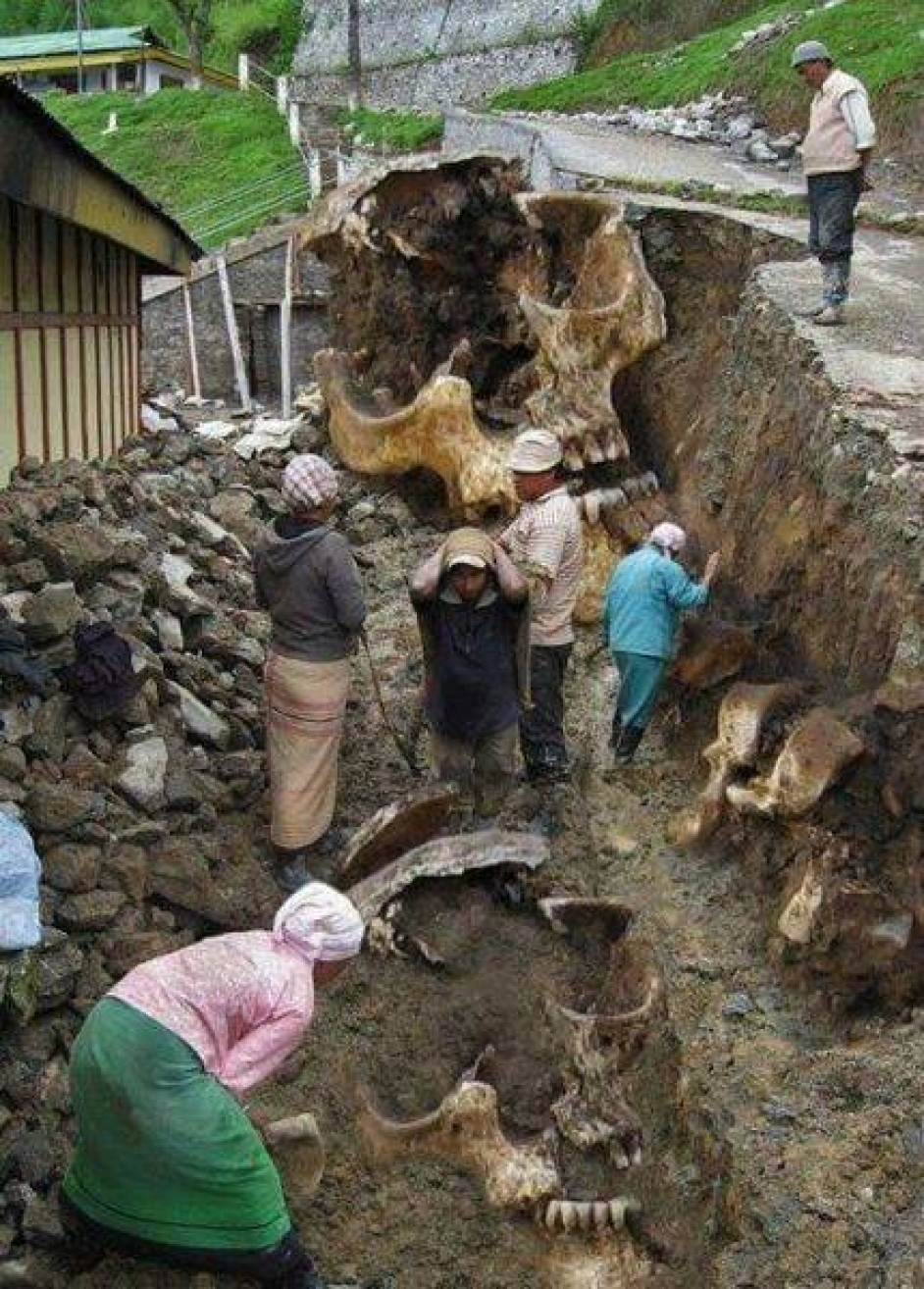 Villagers digging up Giant Skeletons In Equador