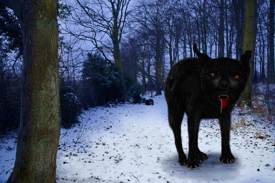 Is it him? The bones are believed to date back to the 16th century, when the legendary hell hound Black Shuck (pictured in an artist's impression) was rumoured to roam East Anglia. They show the dog was a 'large male'
