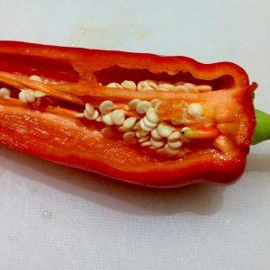 Capsicum Annuum Chilifrön