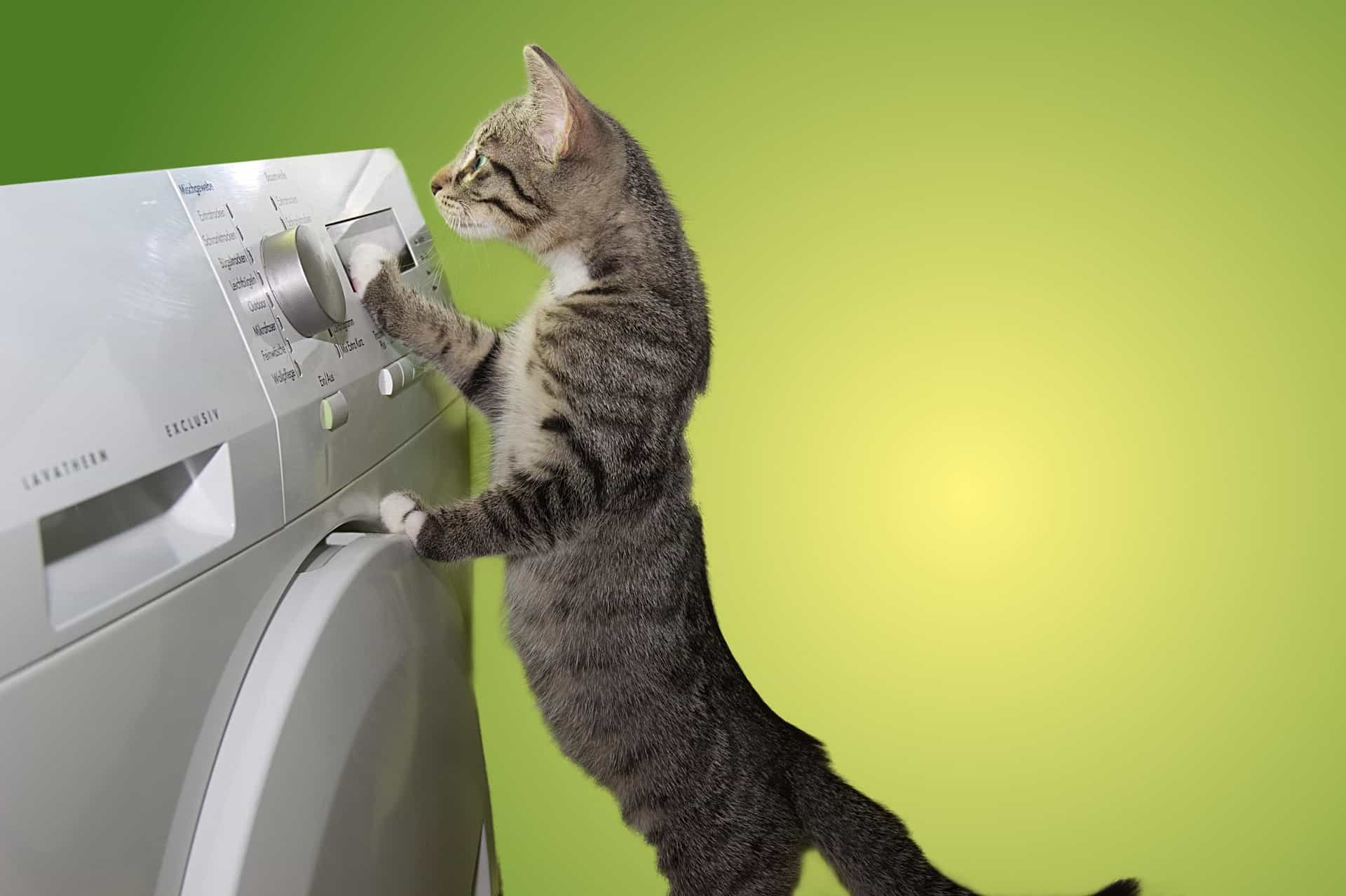 tabby cat standing on back legs looking at tumble dryer